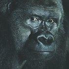 Cómo hacer una máscara de gorila con goma