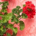 Flores que son indicadores naturales