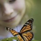 Cómo calcular el índice de biodiversidad
