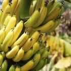 Bananas como alimento para el cerebro