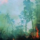 ¿Qué animales pueden sobrevivir únicamente en los bosques tropicales?