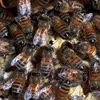 Cómo atraer un enjambre de abejas