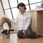 Cómo controlar las convulsiones caninas