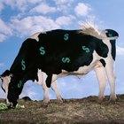 Cómo comenzar un negocio de ganado