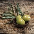 Efectos secundarios del extracto de hojas de olivo