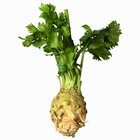 Can You Eat Celery Root Without Cooking It?