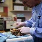 Carreras para un patólogo forense