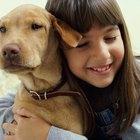 Cómo abrir una perrera para mascotas