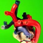 Cómo cuidar el sistema circulatorio