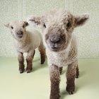 En qué consiste la clonación