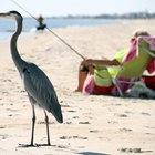 Shore-Fishing on St. George Island, Florida