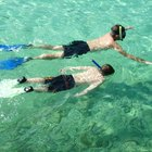 Snorkeling Nearest to St. Pete Beach, Florida