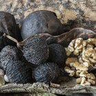 How to Sell My Black Walnuts