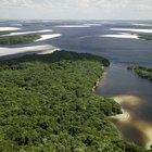 Plantas en llanuras fluviales