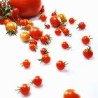¿Cuántas calorías tiene un tomate?