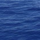 La importancia del oxígeno en los ecosistemas terrestres y acuáticos
