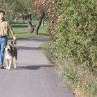 ¿Cuáles son los beneficios de caminar 40 minutos diarios?
