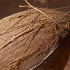 Cómo aplicar aceite de coco sobre la piel y el cabello con fines saludables
