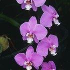 ¿Una orquídea tiene que estar bajo la luz del sol?