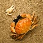 Cómo agregar una rana o un cangrejo a tu acuario de agua dulce