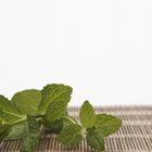 How Do You Infuse Cookies With Mint When Baking?