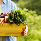 Alimentos que reducen la acidez