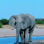 Los animales terrestres más grandes del mundo