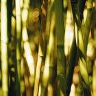 Cómo quemar el bambú para endurecerlo