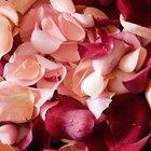 Para qué se usa el aceite de rosas