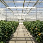 Top 10 Profitable Greenhouse Crops