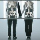 Partes principales del sistema óseo