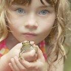 Similitudes de las ranas y los seres humanos