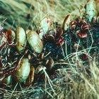 ¿Cuál es el mejor pesticida para matar las garrapatas?