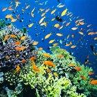 Definición de la ecología de los ecosistemas