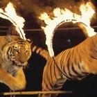 Cómo hablarle a los niños sobre los animales del circo