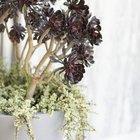 Cómo armar macetas con plantas suculentas