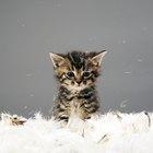 Cómo saber si tu gata está próxima a dar a luz