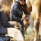 ¿Cuáles son los tratamientos para la sarna en caballos?