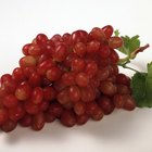 ¿Cuáles son los beneficios de comer uvas rojas frescas sin semillas?