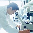 Diferentes tipos de microscopios y sus usos