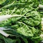Ways to Cook Beet Greens