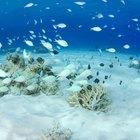 ¿Qué peces pueden vivir en agua salada y agua dulce?