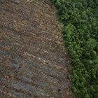 Actividad para la clase sobre la deforestación de la selva