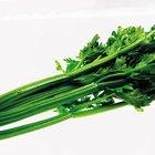 Alimentos que ayudan a limpiar las heces impactadas de tu colon