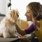 Salud canina e infecciones de la vulva