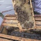 Cómo vender tu miel