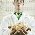 Diferencias entre el cerebro humano y el cerebro de las ovejas