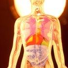 Probióticos y quimioterapia