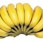 La tirosina en las bananas
