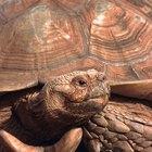 Partes del cuerpo de una tortuga